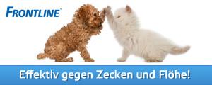 Frontline: effektiv gegen Zecken und Flöhe bei Hunden und Katzen