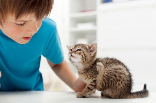junge Katze kratzt sich