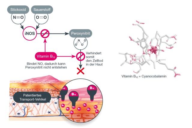 Bild gesunde Haut und Haut mit Neurodermitis