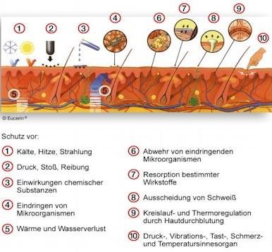 Eucerin Funktionen der Haut