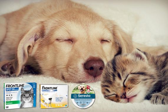 Bild-Text-Teaser Tierbedarf Insektenschutz