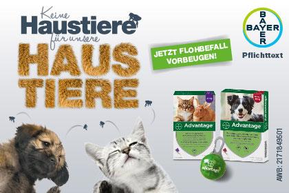 Advantage von Bayer gegen Haustier-Paarasiten