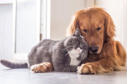 Produkte für Ihre Haustiere aus Ihrer Apotheke