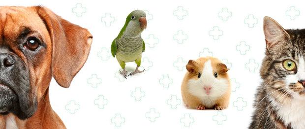 Die Hausapotheke für Ihr Haustier