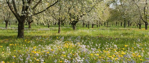 Heuschnupfen – wenn die Pollen im Anflug sind