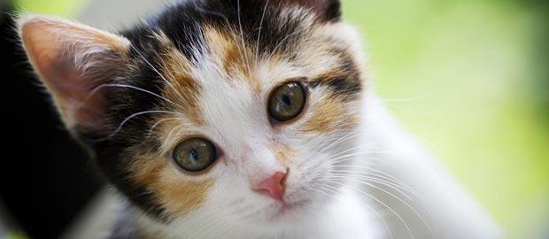 Katze und Co schützen vor Neurodermitis