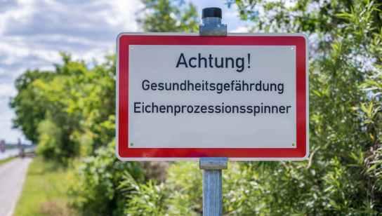 Warnung vor dem Eichenprozessionsspinner